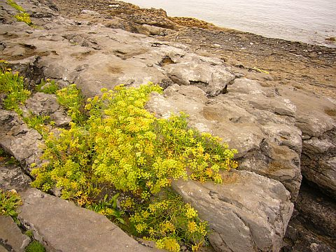 http://deiatatu.files.wordpress.com/2007/10/burren1.jpg